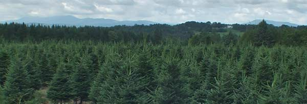 vermont christmas tree farm - Christmas Tree Farming
