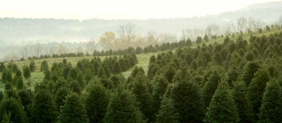 Tree Line is the official publication of the New Hampshire-Vermont Christmas  Tree Association, and members rely on it to learn about association  activities, ... - Christmas Trees In The News: NH-VT Christmas Tree Association